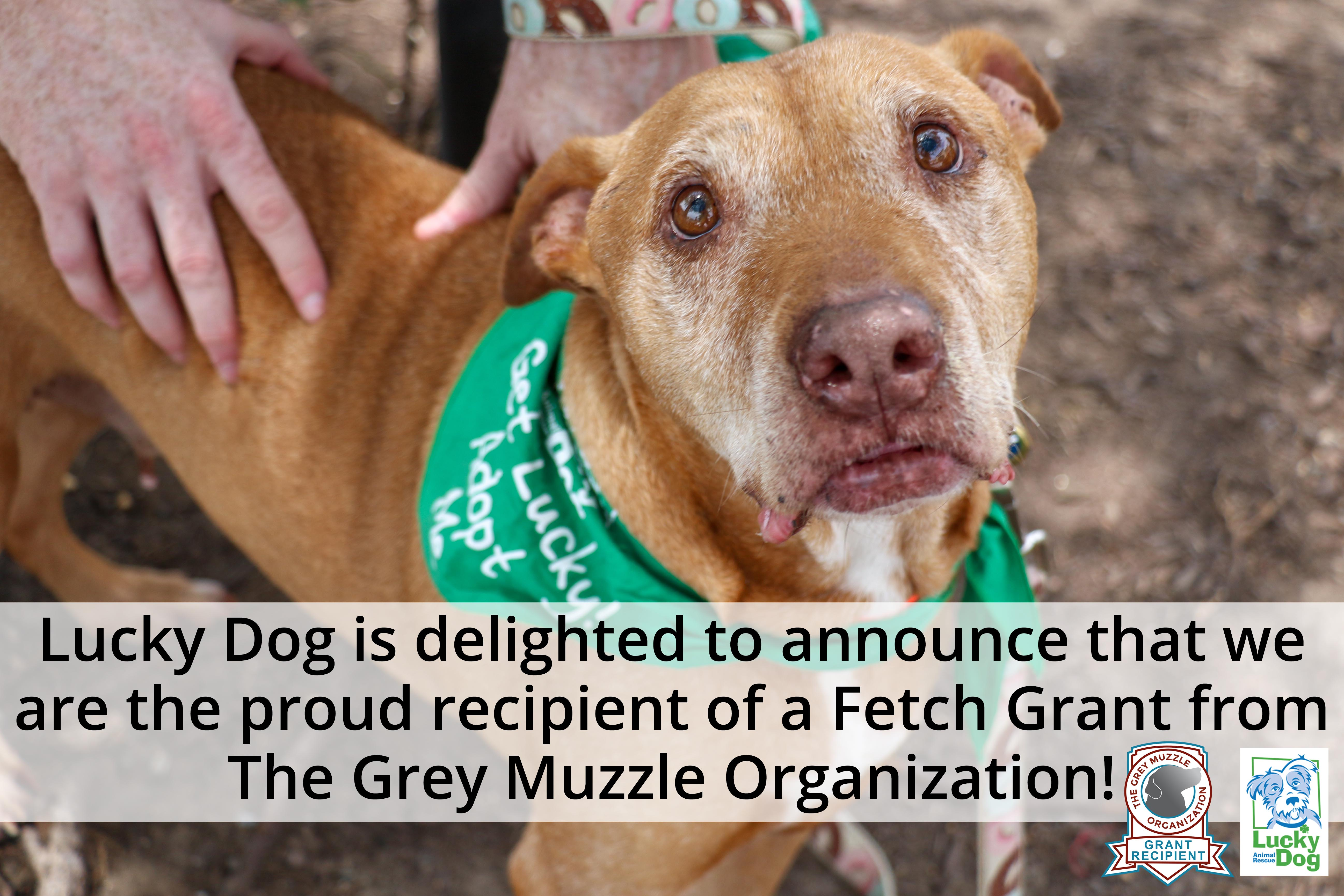 Lucky Dog's July News!